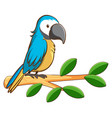 blue parrot on white background vector image
