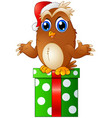 cartoon christmas owls and gift vector image