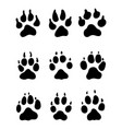 print of paw of dogs vector image vector image