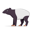 tapir standing on a white background vector image vector image