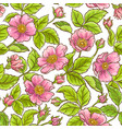 wild rose pattern vector image