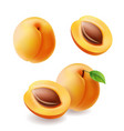apricots with leaf realistic fruit vector image