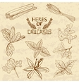 Spices Of The Caucasus A collection of vector image vector image