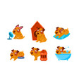 cute little dog character set funny brown puppy vector image vector image