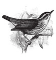 new york waterthrush vintage vector image vector image
