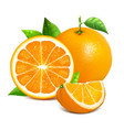 orange whole and slices vector image vector image