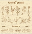 Spice in French cuisine Herbs used in France for vector image vector image
