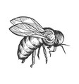 bee insect animal sketch engraving vector image vector image