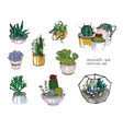cactus and succulents set collection plants in vector image vector image
