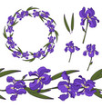 pack with floral elements with iris vector image vector image
