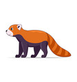 red panda standing on a white background vector image vector image