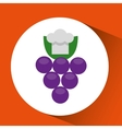 cheerful chef fresh grapes graphic vector image