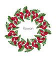 wreath red rowan tree ornament twig of rowanberry vector image