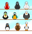 cartoon birds vector image vector image