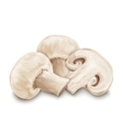 Champignon mushrooms isolated vector image