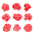 drawing red roses flowers vector image
