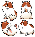 hamster vector image vector image