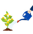 watering money coin tree with can vector image vector image