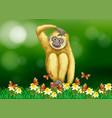 white gibbon sitting on grass vector image vector image