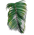 a tropical palm leaf vector image vector image