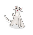character of burmilla cat in kawaii style vector image vector image