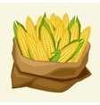 stylized sack with fresh ripe corn cobs vector image