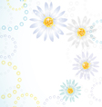 daisy flowers on the greeting card vector image vector image