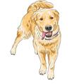happy Labrador Retriever smiling vector image vector image