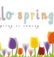 hello spring tulip vector image vector image