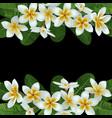 plumeria tropical border vector image vector image