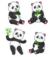 set of four pandas with bamboo vector image