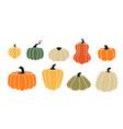 cartoon squash autumn pumpkin harvest ripe vector image