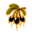 Bunch off olives dripping olive oil vector image