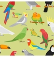Cartoon parrot seamless pattern vector image