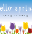 hello spring tulip blue background vector image vector image