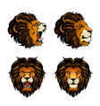 collection of four colored lion heads vector image vector image