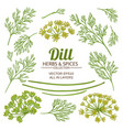 dill plant elements set vector image vector image