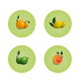 Orange Grapefruit Lime Lemon Citrus Fruits Set vector image vector image