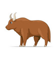 yak standing on a white background vector image vector image