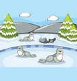 scene with seals in winter vector image vector image