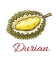 Exotic asian durian fruit sketch for food design vector image