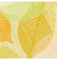 light autumn leaves pattern vector image