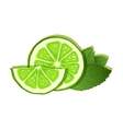 lime and mint on white background vector image vector image