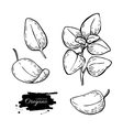 Oregano set drawing Isolated Oregano plant vector image vector image