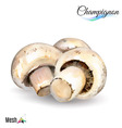 Watercolor champignon vector image vector image