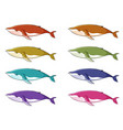 whale in many colors vector image
