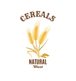 Wheat ear cereals isolated icon vector image