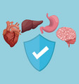 color background with organs human body and shield vector image