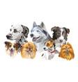 different dog breeds set vector image vector image