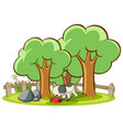 isolated picture cat in garden vector image